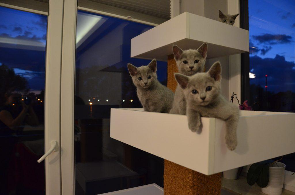 od lewej: Bella, Benita, Baster